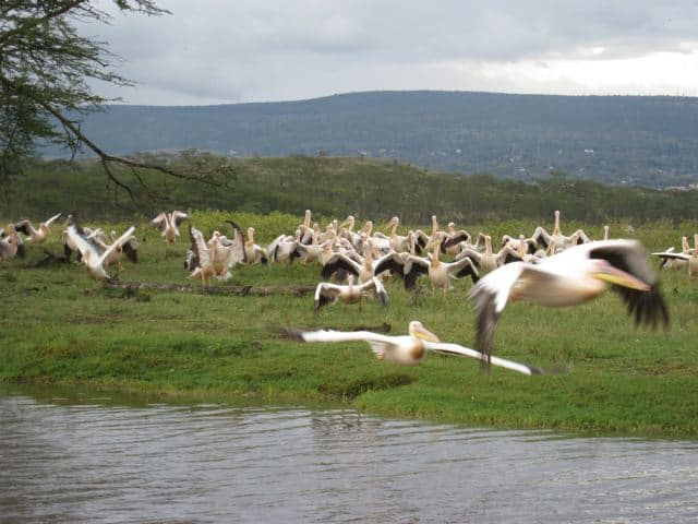 The splendor of Lake Nakuru