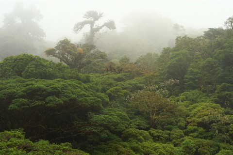Enchanting spots: Monteverde Cloud Forest, Costa Rica