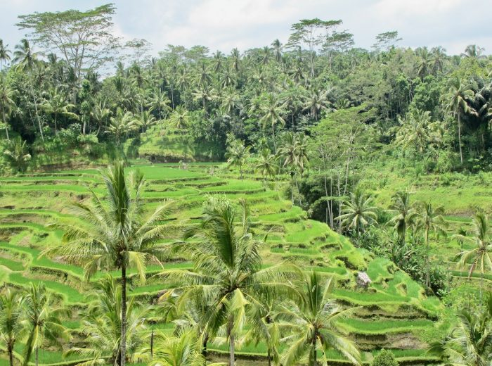 A day out in Bali