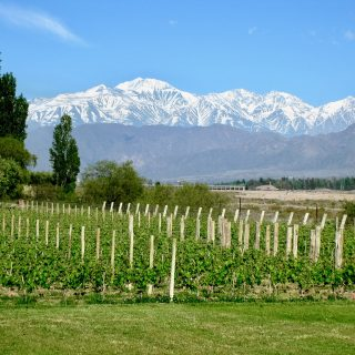 mendoa-vineyard-andes-photo