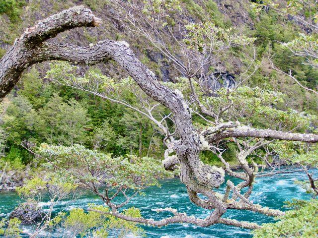petrohue-river-emerald-colour-photo