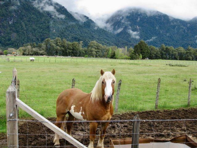 pony-peulla-photo