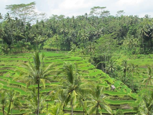 Ten things to do in Bali