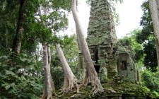 angkor-temple-jungle-photo