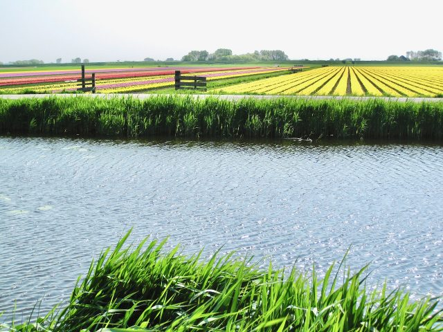 tulip-fields-canal-holland-photo