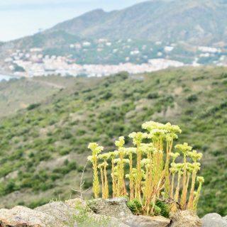 cap-de-creus-catalonia-photo