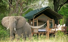 Botswana – Sanctuary Stanley's Camp
