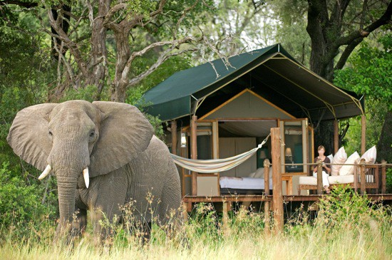 Five glamping luxury safaris