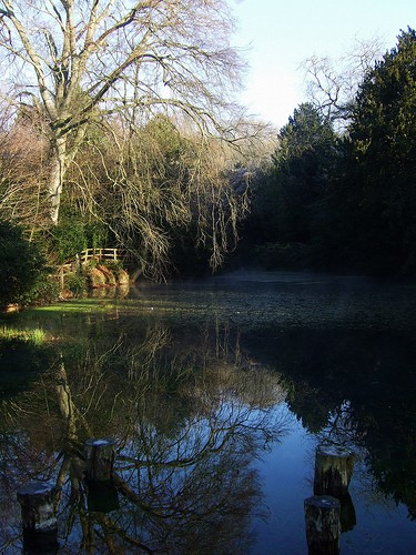 silent-pool-shere-photo