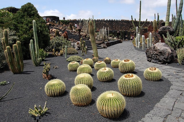 10 things to see and do in lanzarote for Jardin cactus lanzarote