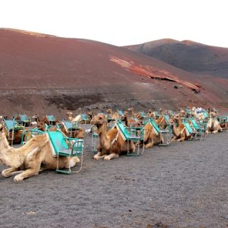 camels-timanfaya-lanzarote-photo