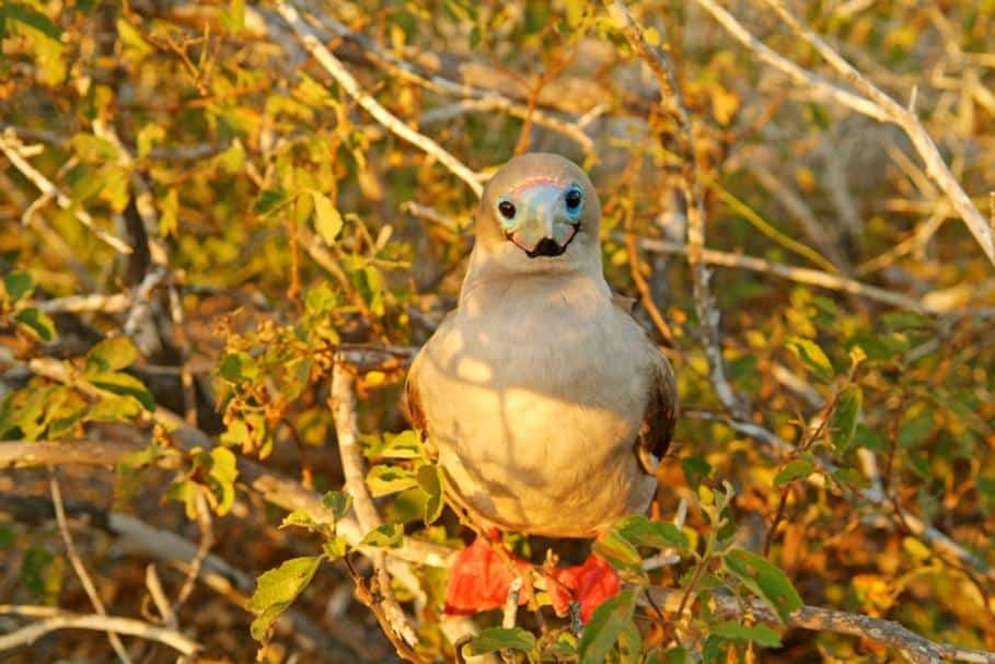 galapagos-bird-photo