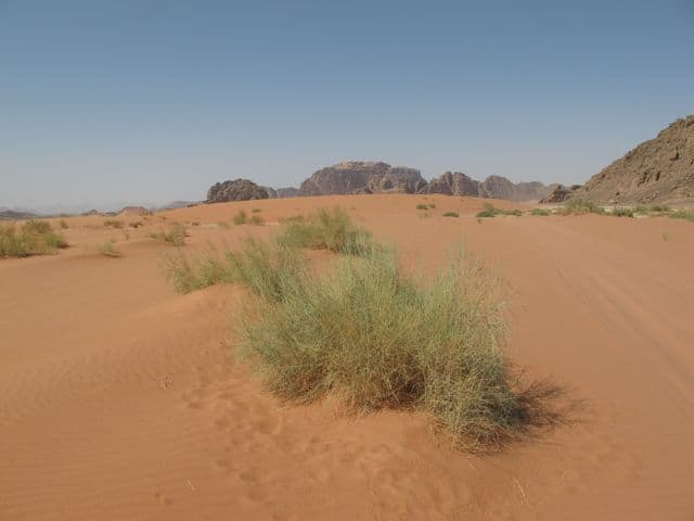 wadi-rum-sand-green-bush-photo
