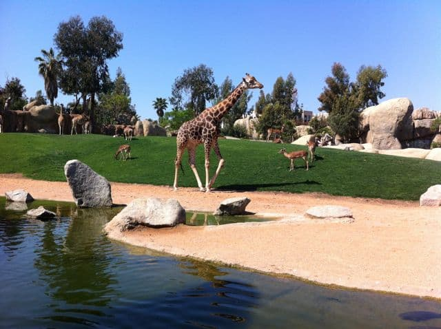 bioparc-valencia-photo