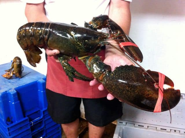 Worlds biggest lobster ever caught