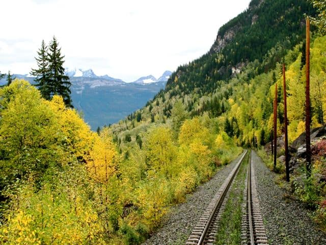 yellow-forest-rockies-photo