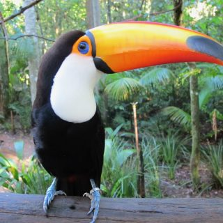 toucan-parque-das-aves-photo