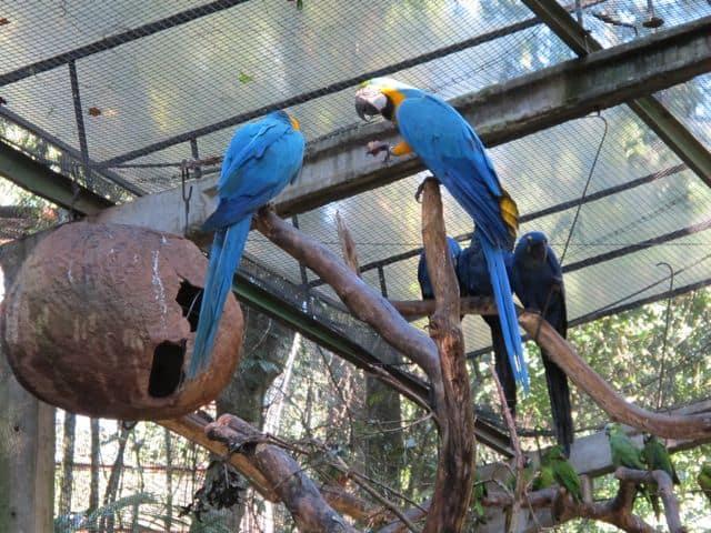 parrot-aviary-photo