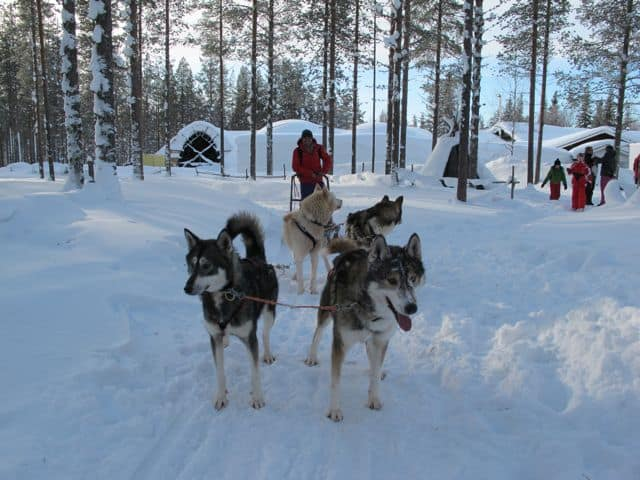 husky-sled-finnish-lapland-photo