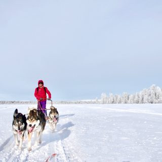 keith-husky-safari-lapland-photo