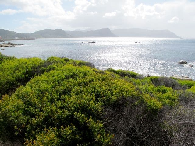 boulders-beach-false-bay-photo