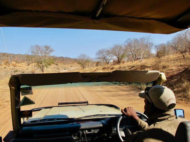 safari-game-drive-chobe-photo