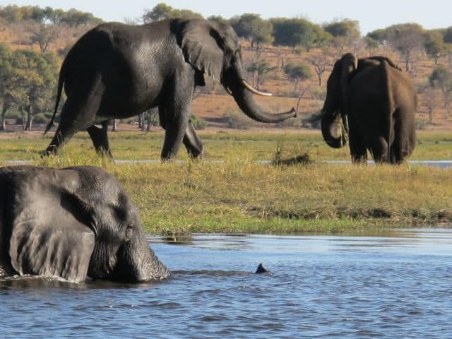 Spellbound in Chobe