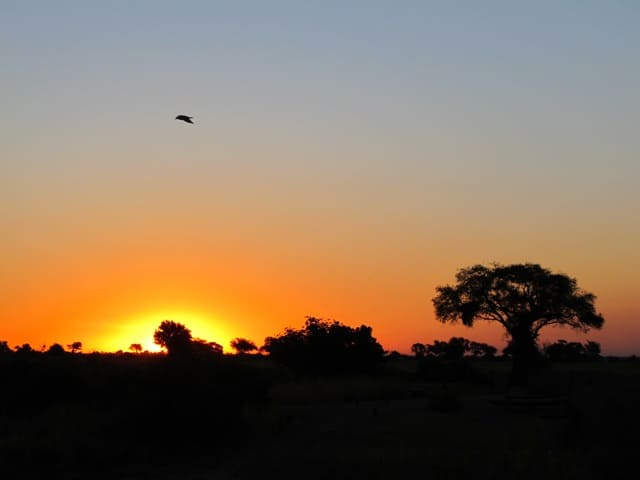 chobe-botswana-sunset-photo