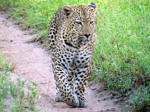 Safaris in South Africa