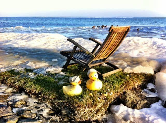 ducks-chair-markermeer-photo