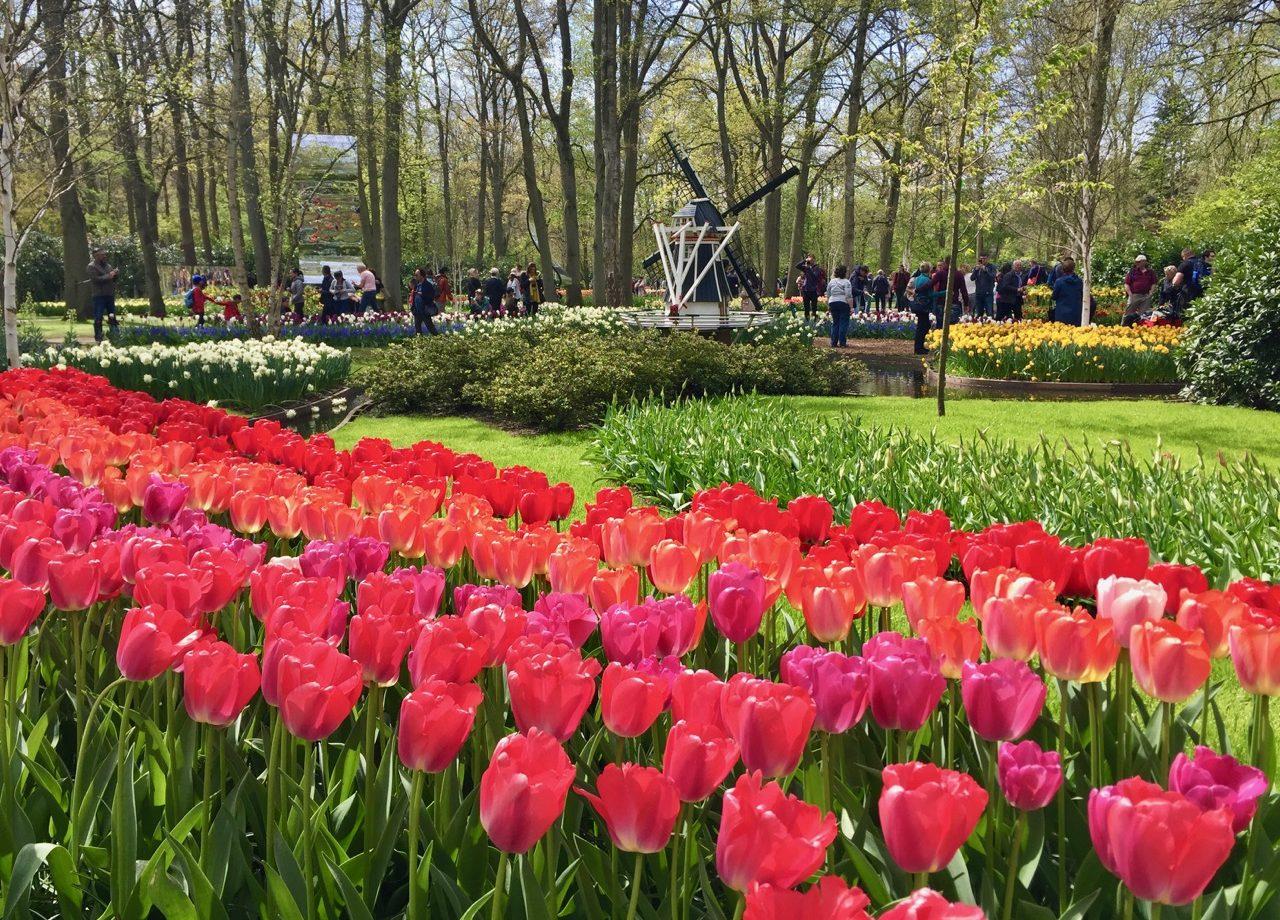 keukenhof-gardens-tulips-photo