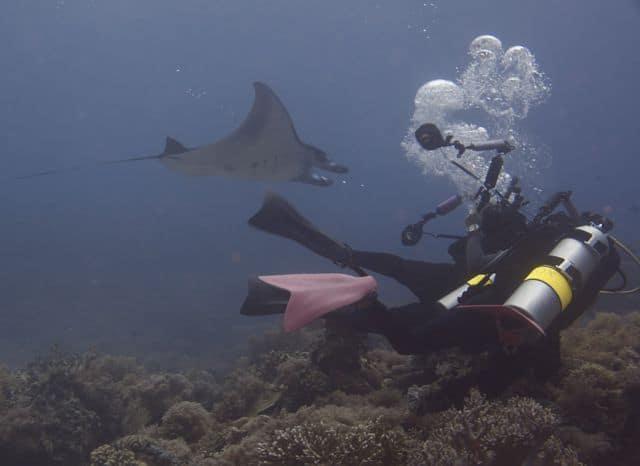 Chasing a manta ray at Tubbataha Reef Marine Park (image courtesy of Jayvee F.)