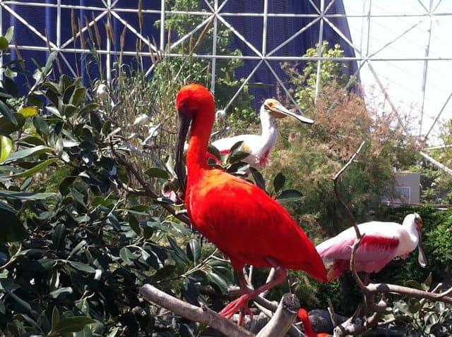 birdlife-oceanografic-photo