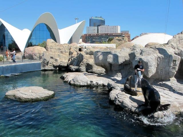 oceanografic-seals-photo