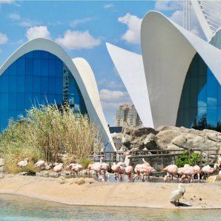 wildlife-attractions-valencia-photo