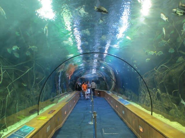 oceanografic-valencia-tunnel