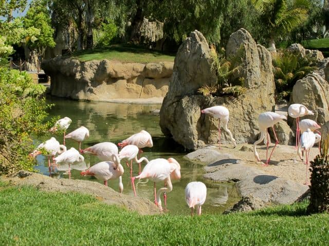 flamingos-bioparc-photo