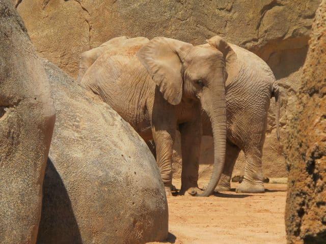 bioparc-elephants-photo