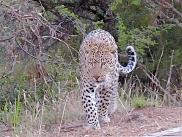 Unforgettable encounters at Pilanesberg National Park