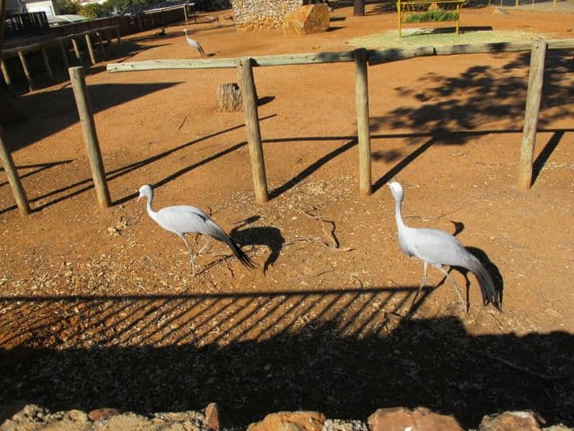birds-bloemfontein-zoo-photo