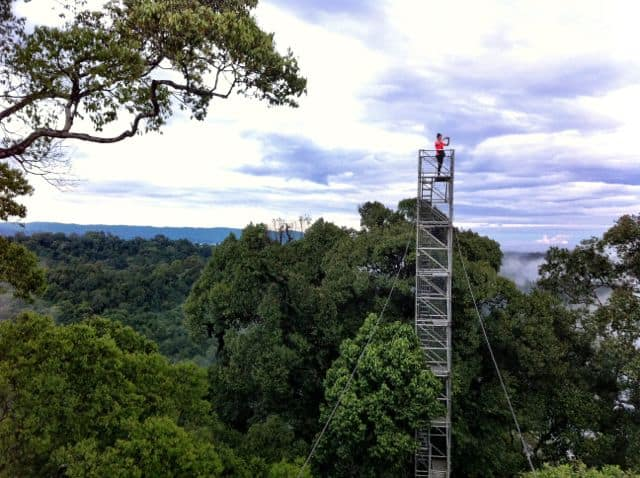 canopy-walk-temburong-photo