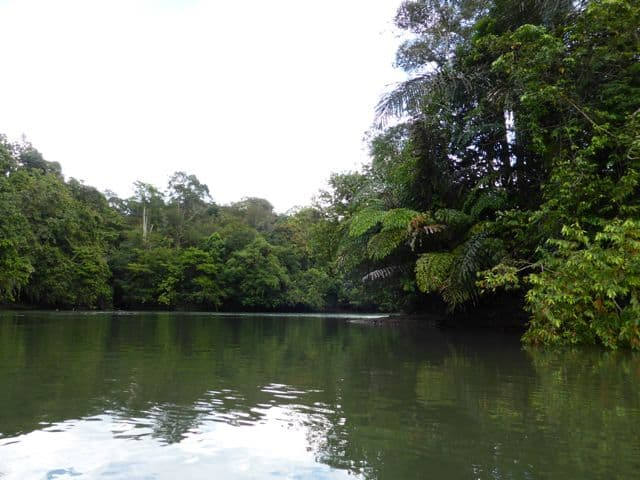 brunei-tropical-jungle-photo
