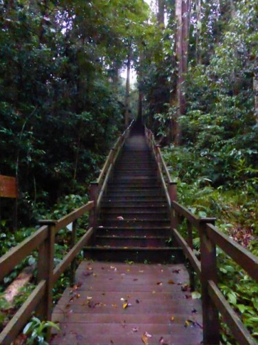brunei-jungle-temburong-walk-photo