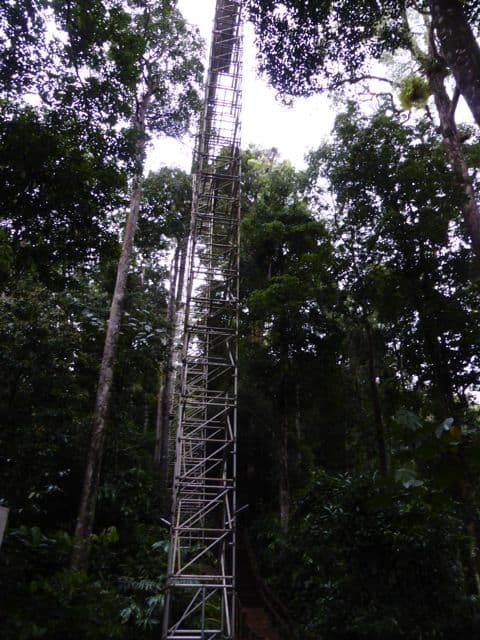 canopy-walk-temburong-structure-photo