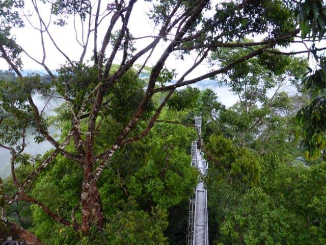 jungle-canopy-walk-photo
