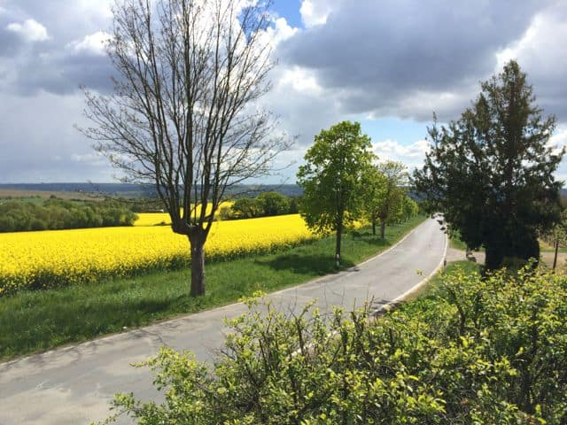 rheingau-fields-photo