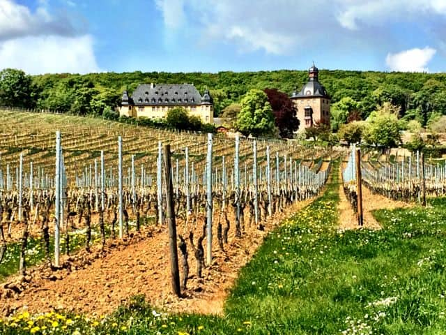 History and wine in Rheingau