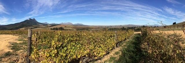 warwick-wine-estate-views-photo