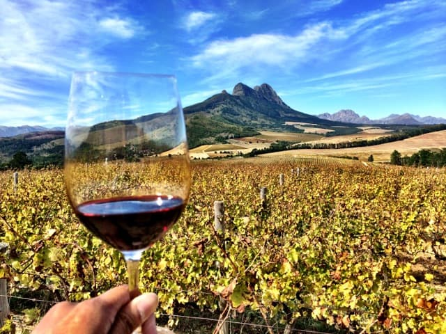 Ten things to do in Stellenbosch