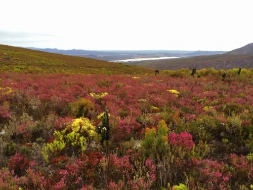 fynbos-photo
